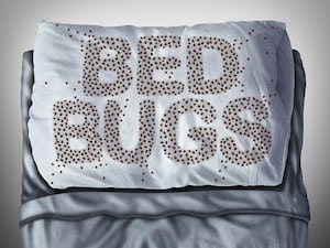 Think Extermination Ends Your Bedbug Woes? Think Again